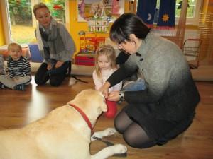 Uczymy się jak prawidłowo częstować psy przekąskami :-)